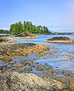 Vancouver Island Photos - Coast of Pacific ocean on Vancouver Island by Elena Elisseeva