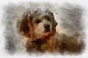 Cocker Spaniel Photo Art 01 Print by Thomas Woolworth