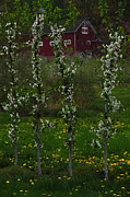 Belchertown Prints - Cold Spring Orchard Print by Mike Martin