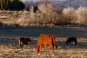 ELITE IMAGE photography By Chad McDermott - Colorado Horse Ranch