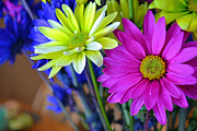 Briella Danowski - Colorful Daisies