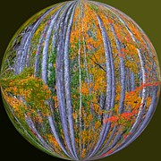 Photos Of Autumn Prints - Colorful Fall Forest Print by Scott Cameron