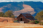 Old Barn Prints - Columbia River Barn Print by Peter Tellone