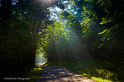 Dirt Roads Photo Originals - Come To The Light by Paul Herrmann