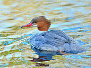 Kathy King - Common Merganser