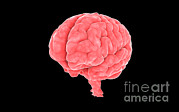 Featured Art - Conceptual Image Of Human Brain by Stocktrek Images