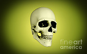 Zygomatic Bones Posters - Conceptual View Of Human Skull Poster by Stocktrek Images