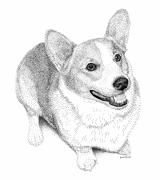 Corgi Drawings - Corgi by Scott Woyak