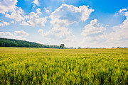 Cornfield Photos - Cornfield in Tuscany by JR Photography
