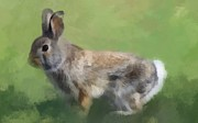 Maciej Froncisz - Cottontail Rabbit