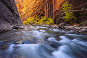 Virgin River Prints - Cottonwood Row Print by Joseph Rossbach