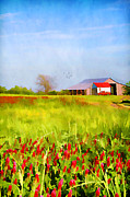 Pasture Herb Framed Prints - Country Kind of Spring Framed Print by Darren Fisher