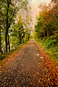 Fall Landscape Prints - Country Lane Print by Adrian Evans