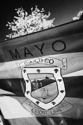 Westport Posters - County Mayo Gaa County Flag Republic Of Ireland Poster by Joe Fox