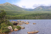 Mount Katahdin Posters - Cow Moose and Mount Katahdin Poster by John Burk