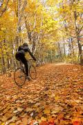 Autumn Leaf Posters - Cyclist Riding In Autumn On Humber Poster by Peter Mintz