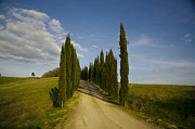 Tree Allee Framed Prints - Cypress allee Framed Print by Mats Silvan