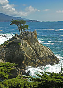 All - Cypress Point ll by Rich Stedman