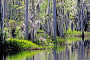 Cypress Trees Digital Art Posters - Cypress Swamp Poster by Diana  Tyson