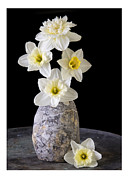Amaryllis Photos - Daffodils by Edward Fielding