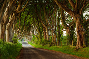 Dark Hedges Prints - Dark Hedges  Northern Ireland Print by Przemyslaw Zdrojewski