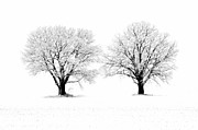 Winter Trees Posters - Dead of Winter Poster by Ron Sloan