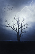 Thunderstorm Framed Prints - Dead Tree Framed Print by Joana Kruse