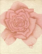 Parchment Drawings Prints - Delicate Blush Print by Dusty Reed