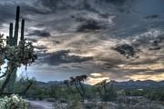 Tam Ryan - Desert Sunset