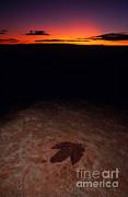 Francois Gohier - Dinosaur Footprint