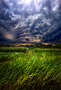 Phil Koch - Disturbance
