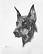 Trial Drawings Posters - Dog Show Trial Dobe with a Long Ear Cut Poster by Mary Dove