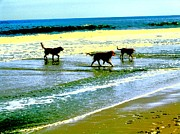 Dog Play Beach Framed Prints - Dogs at the Beach Framed Print by Jim Vansant