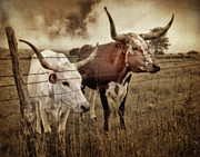Longhorn Photos - Dont Fence Me In by David and Carol Kelly