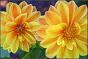 Double Delight  - Dahlias Print by Dora Sofia Caputo