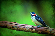 Bark Design Photos - Downy Woodpecker by Darren Fisher