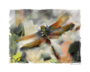 Insects Digital Art Metal Prints - Dragonfly Garden Metal Print by Bob Salo