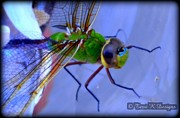 Terri K Designs - Dragonfly