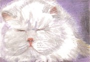 Cat Pastels - Dreaming Cat by Serran Dalmak