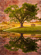 Autumn Scenes Metal Prints - Dreaming Metal Print by Debra and Dave Vanderlaan