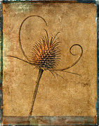 Robert Jensen Art - Dried Thistle by Robert Jensen
