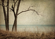 Landscape Metal Prints - Drifting Metal Print by Amy Weiss