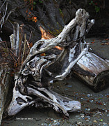 Driftwood On The Beach Print by Tom Janca