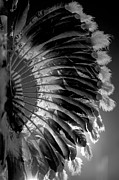 Powwow Posters - Eagle Feathers Poster by Chris  Brewington Photography LLC
