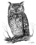 Wildlife Art Drawings Posters - Eagle Owl Poster by Dale Jackson