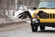 Teresa McGill - Eagle vs Jeep