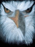 Eagle Pastels Metal Prints - Eagleface Metal Print by Daniel Woo