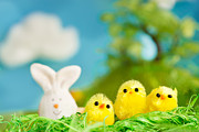 Mythja Prints - Easter chicks Print by Mythja  Photography