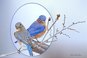 Bonnie Barry - Eastern Bluebird Pair