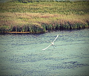 Beak Art - Egret In Flight by Cathy Lindsey